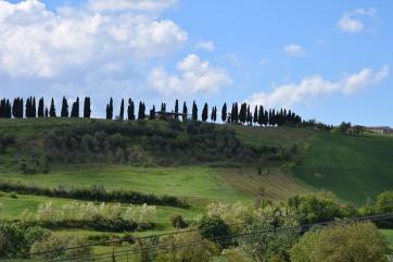Cypress hillside