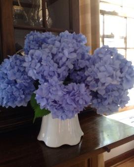 bluehydrangeas
